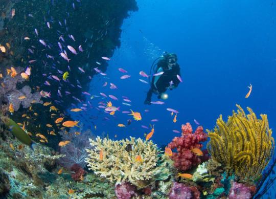 Die Meereswelt erwartet Sie unglaublicher Schönheit und vielen Facetten.